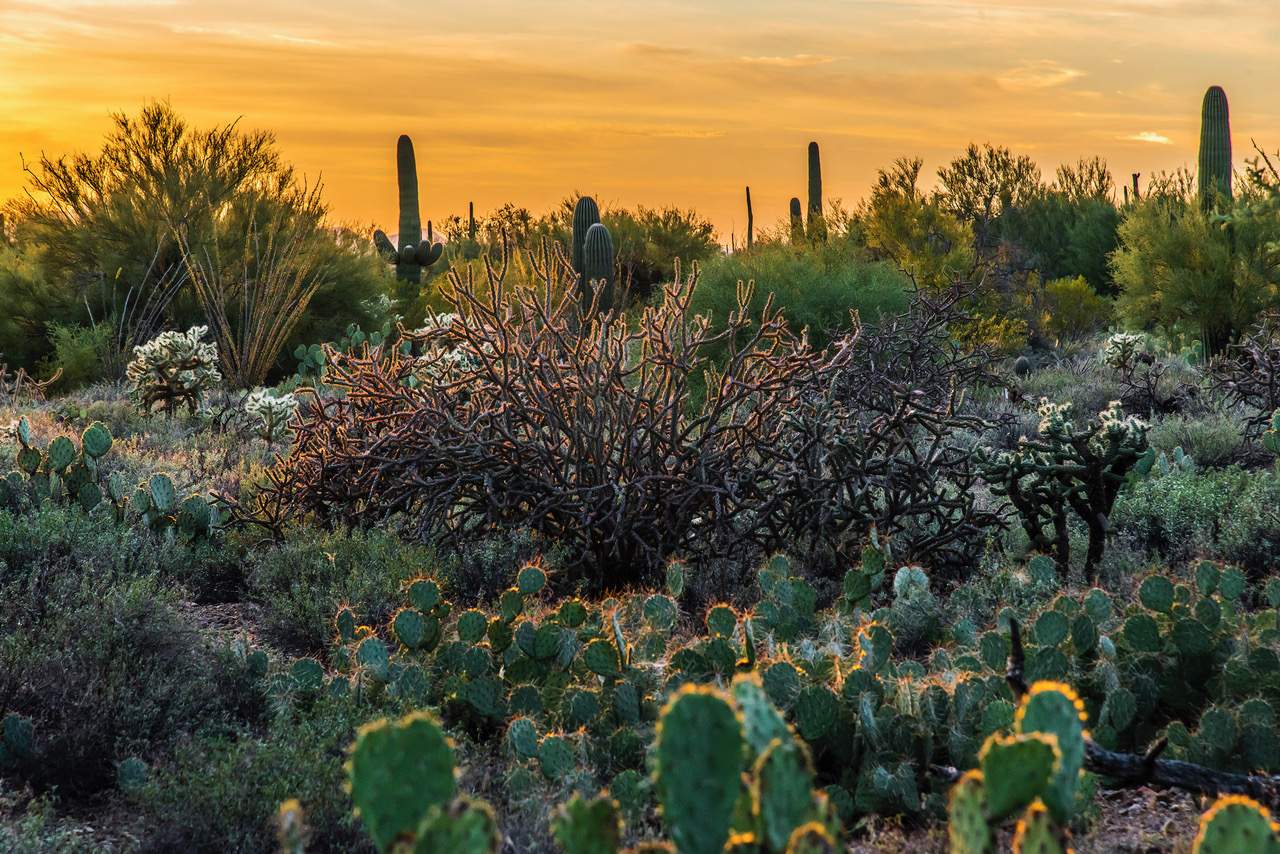 Sunset at Gilbert Ray Campground, Sonoran Desert, outside Tucson, AZ (Photo by John Kelly Green)